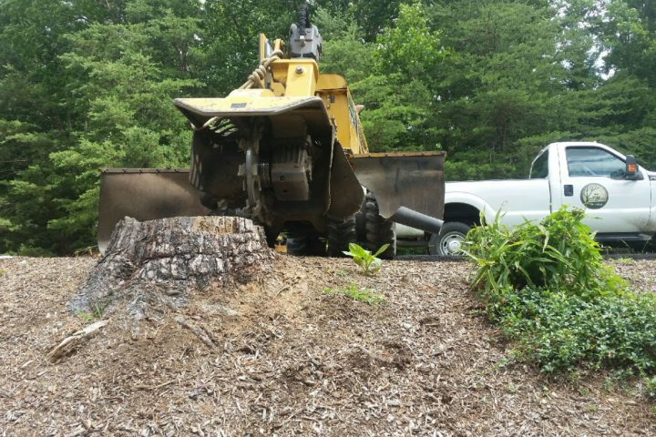 Featured Image for How Stump Removal Keeps Your Yard Safe and Healthy