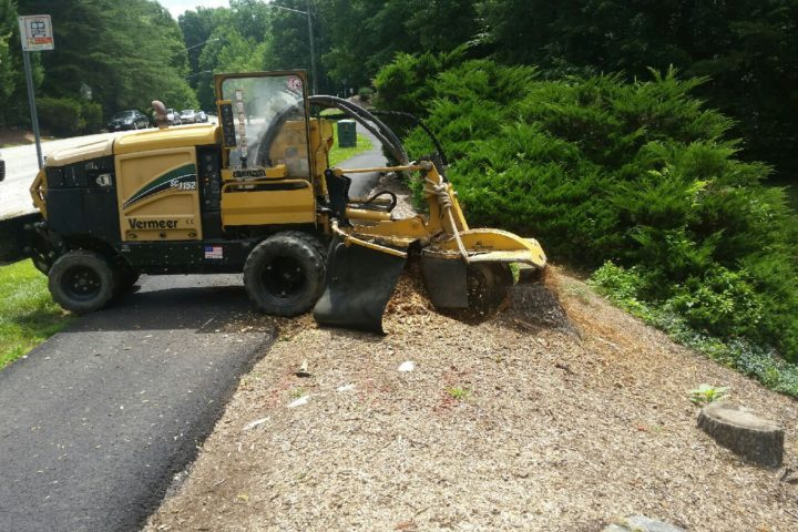 Image for Why Stump Grinding Is So Important