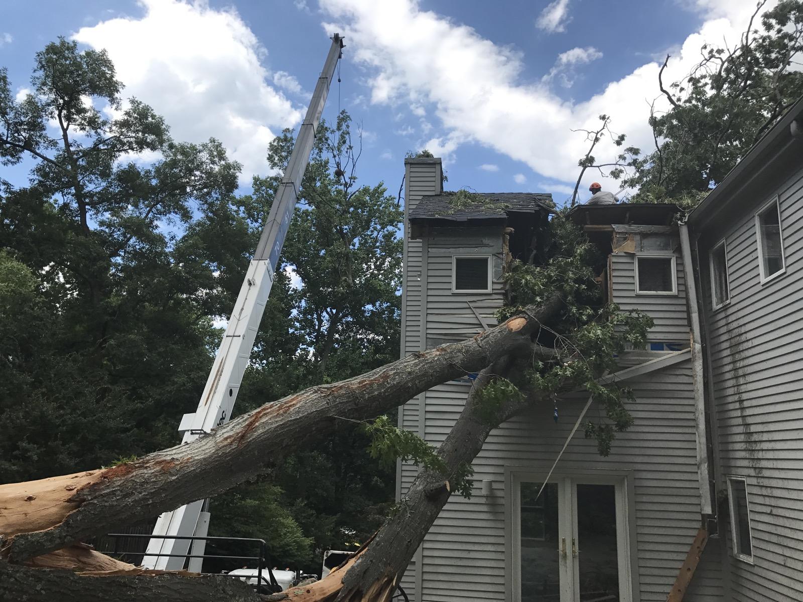 mclean emergency tree removal jl tree service