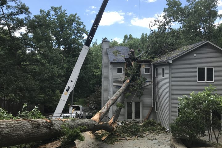 Featured Image for Emergency Tree Service