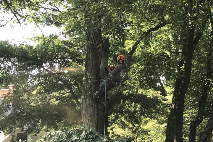 Featured Image for The Importance of Tree Maintenance