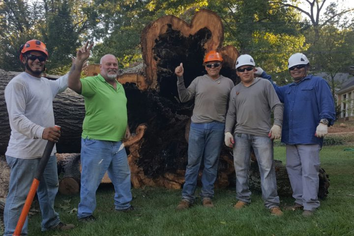 Image for Professional Tree Removal Service is Always The Right Choice