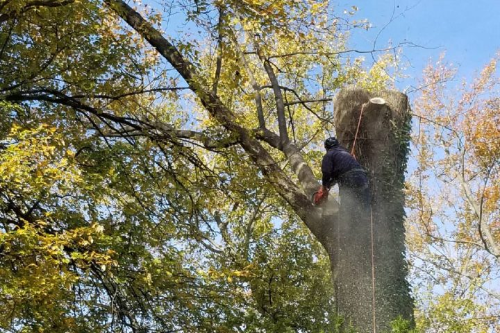 Featured Image for Hiring a Tree Cutting Service: What You Should Know