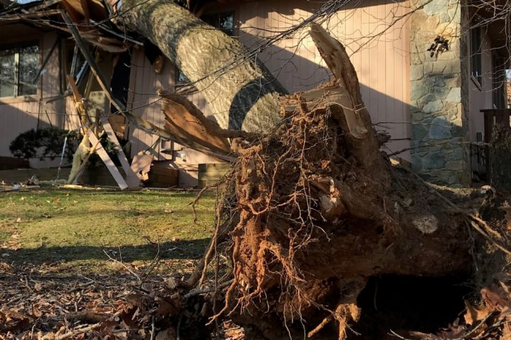 Featured Image for 3 Good Reasons to Remove Dead Trees From Your Property