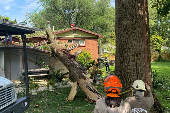 Featured Image for Emergency Tree Service & Removal